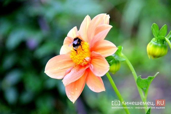 У пятиэтажки на улице Воеводы Боборыкина жители вырастили шикарный цветник фото 25