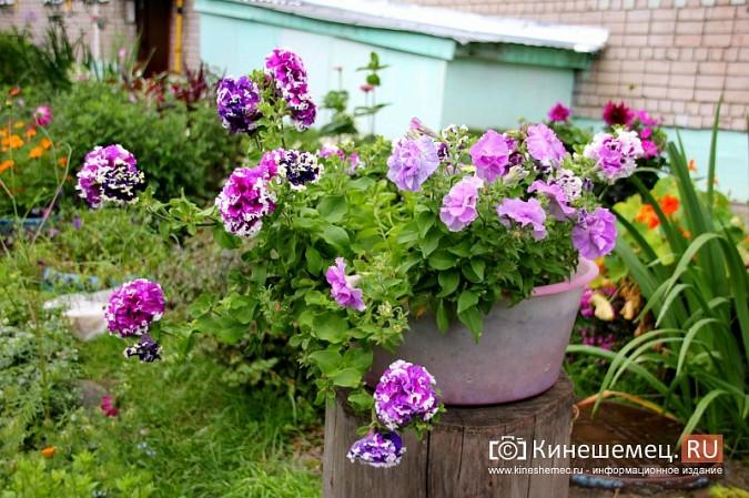 У пятиэтажки на улице Воеводы Боборыкина жители вырастили шикарный цветник фото 10