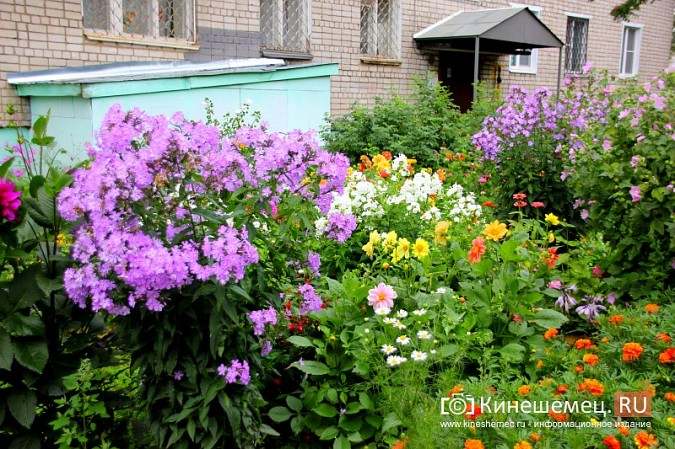 У пятиэтажки на улице Воеводы Боборыкина жители вырастили шикарный цветник фото 9