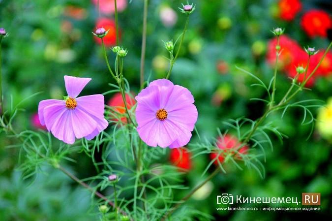 У пятиэтажки на улице Воеводы Боборыкина жители вырастили шикарный цветник фото 29