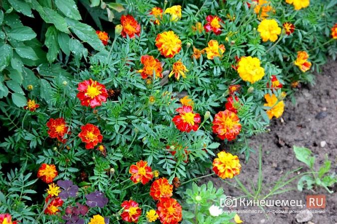 У пятиэтажки на улице Воеводы Боборыкина жители вырастили шикарный цветник фото 32