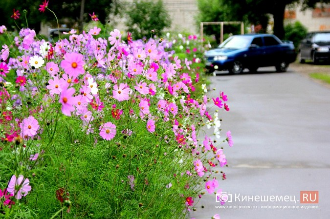 У пятиэтажки на улице Воеводы Боборыкина жители вырастили шикарный цветник фото 31