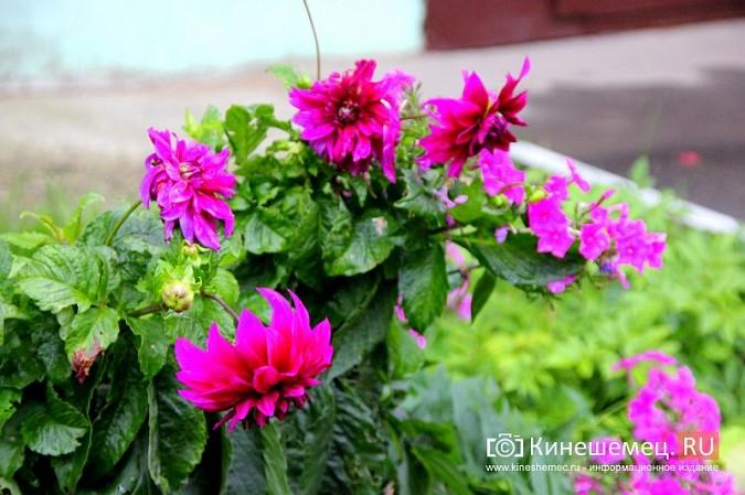 У пятиэтажки на улице Воеводы Боборыкина жители вырастили шикарный цветник фото 28