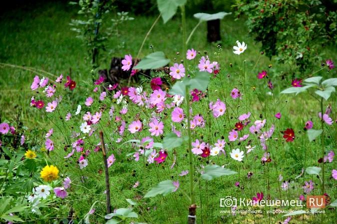 У пятиэтажки на улице Воеводы Боборыкина жители вырастили шикарный цветник фото 33