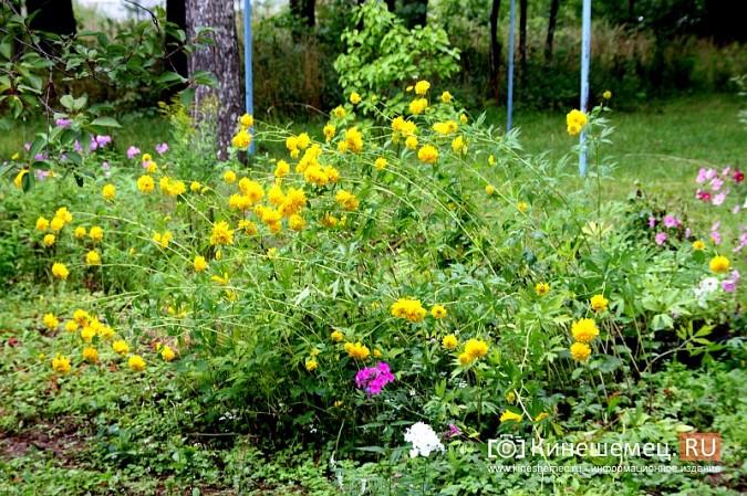 У пятиэтажки на улице Воеводы Боборыкина жители вырастили шикарный цветник фото 34