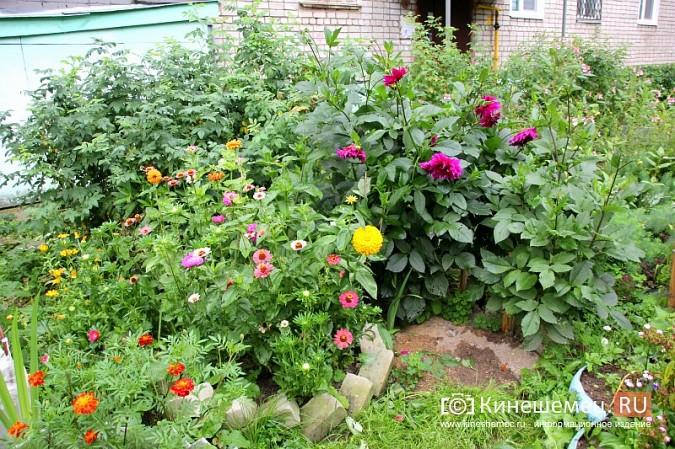 У пятиэтажки на улице Воеводы Боборыкина жители вырастили шикарный цветник фото 3