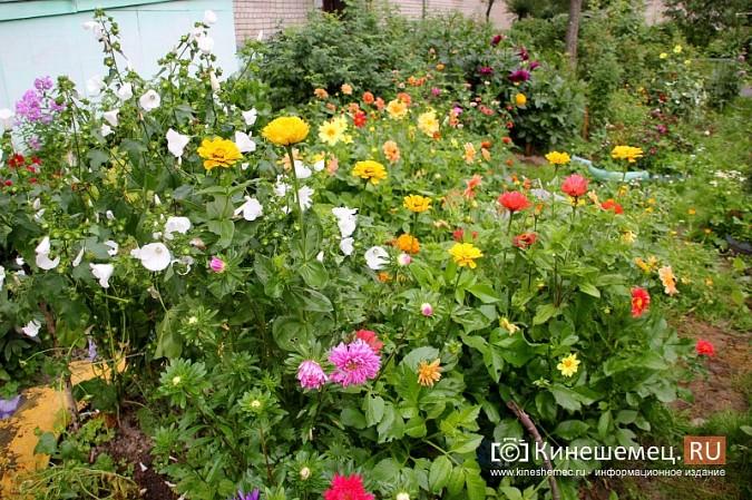 У пятиэтажки на улице Воеводы Боборыкина жители вырастили шикарный цветник фото 7
