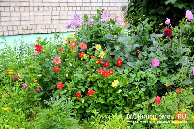 У пятиэтажки на улице Воеводы Боборыкина жители вырастили шикарный цветник фото 17