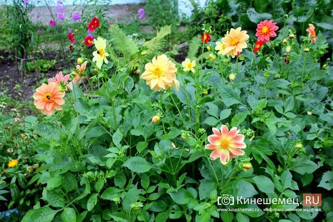 У пятиэтажки на улице Воеводы Боборыкина жители вырастили шикарный цветник фото 6