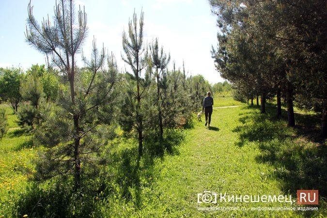 Администрация прокомментировала будущую застройку «зеленой зоны» у Ванцетти, 44 фото 3