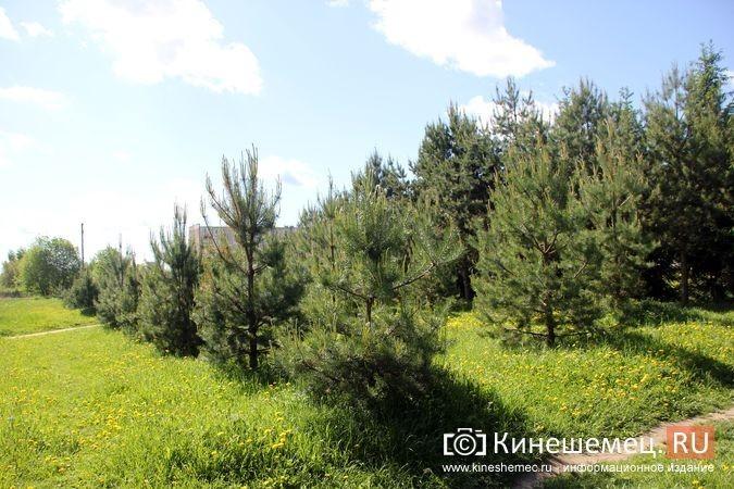 Администрация прокомментировала будущую застройку «зеленой зоны» у Ванцетти, 44 фото 2