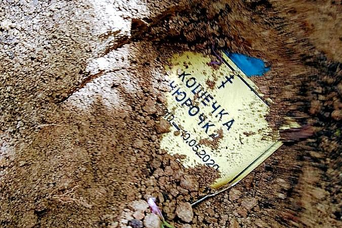 Соседи обвиняют жителя Кинешмы в организации кладбища животных под окнами дома фото 2