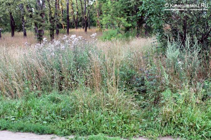 Память о погибших кинешемцах заросла травой фото 6