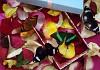 Тропические бабочки на свадьбу
