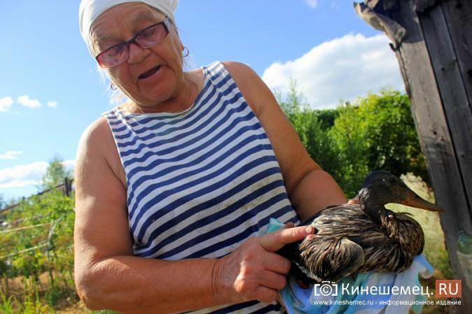 Кинешемцы спасают птиц, погибающих на очистных одного из предприятий фото 2