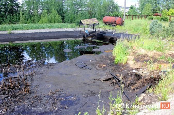 Идет расследование по факту гибели птиц на очистных в Кинешме фото 4
