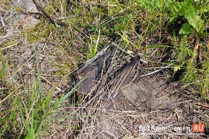 Идет расследование по факту гибели птиц на очистных в Кинешме фото 2