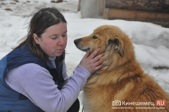 Кинешемские единороссы помогли углем приюту бездомных животных фото 5