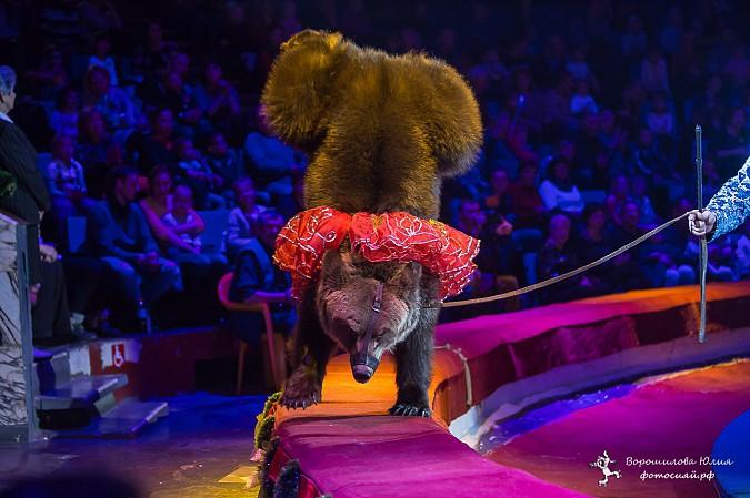 Самая ожидаемая программа сезона  в Ивановском цирке фото 7