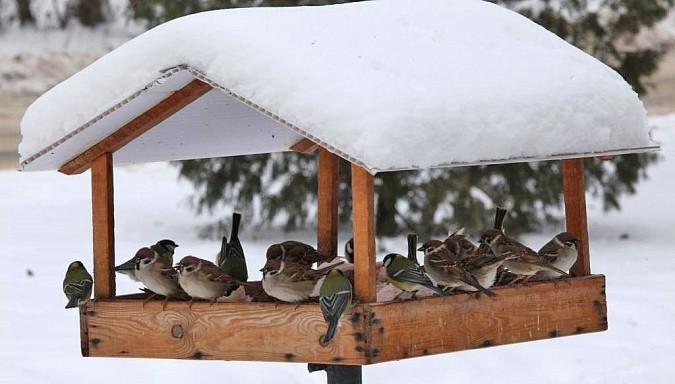 Девочки из Наволок победили в областном конкурсе «Покормите птиц!» фото 2
