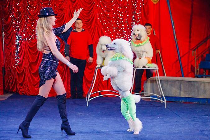 Цирк-шапито «Пегас» в Кинешме фото 7