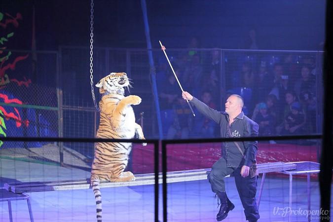 Цирк-шапито «Пегас» в Кинешме фото 17