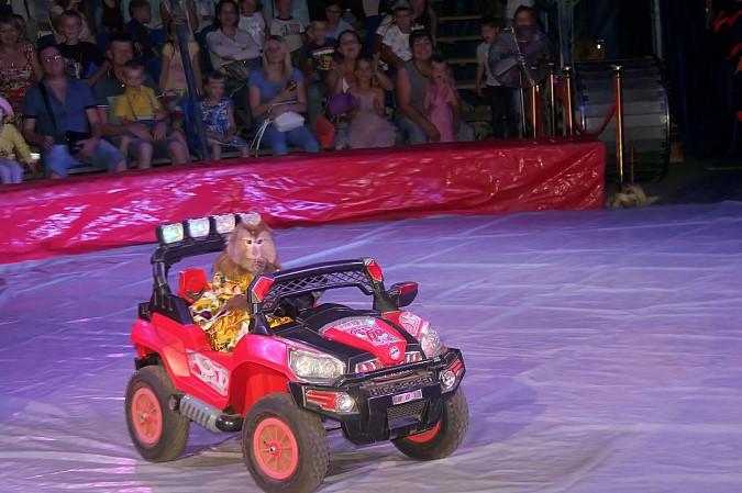 Цирк-шапито «Пегас» в Кинешме фото 11