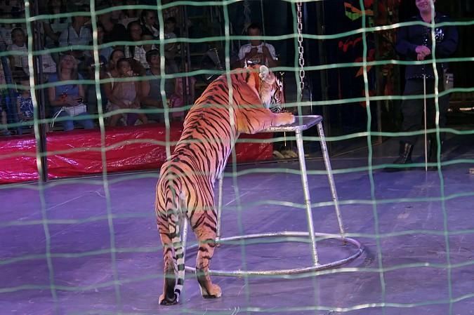 Цирк-шапито «Пегас» в Кинешме фото 16