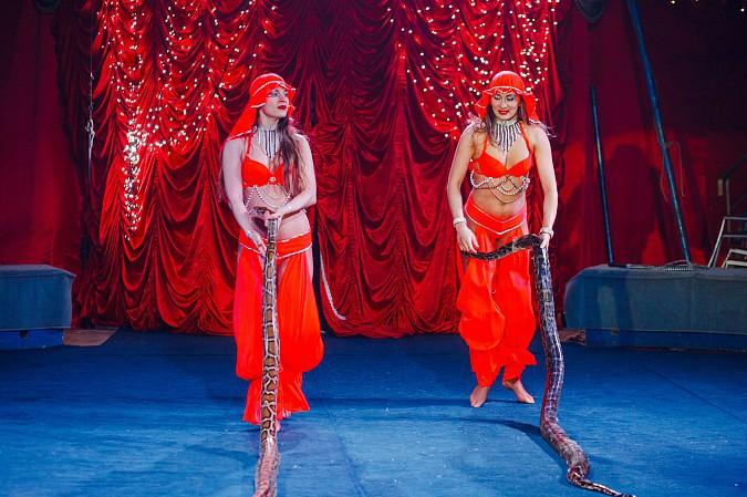 Цирк-шапито «Пегас» в Кинешме фото 5
