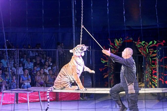 Цирк-шапито «Пегас» в Кинешме фото 20