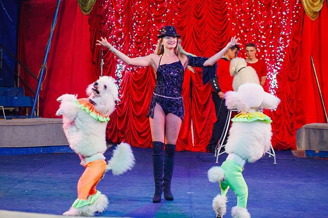 Цирк-шапито «Пегас» в Кинешме фото 8