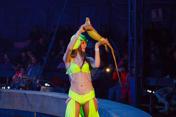 Цирк-шапито «Пегас» в Кинешме фото 15