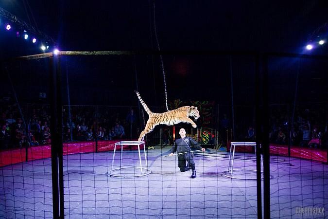 Цирк-шапито «Пегас» в Кинешме фото 18