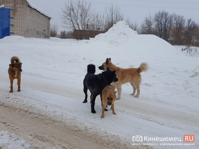 Стая собак на улице Завокзальной