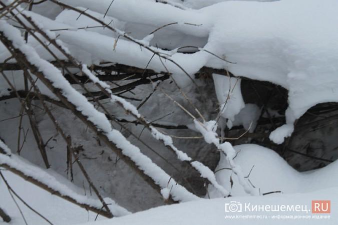 Кинешму атакуют стаи бродячих собак фото 10