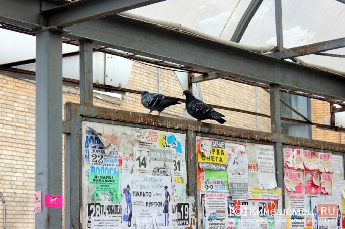 Остановочный павильон в центре Кинешмы загадили голуби фото 6