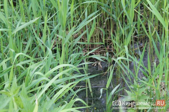 Ядовитый ручей отравляет воду у центрального пляжа Кинешмы фото 22