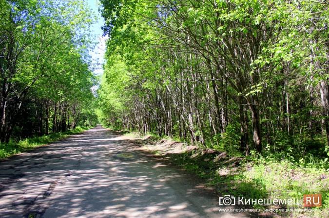 Дорога к лагерю «Радуга» требует вмешательства руководителей Ивановской области фото 11