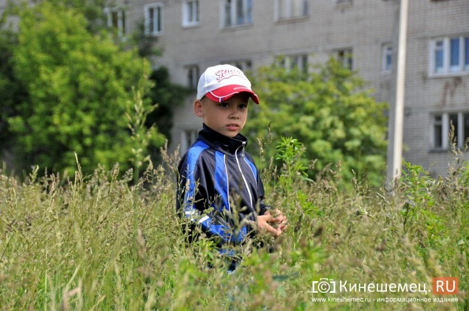 О недовольстве строительством на улице Менделеева жители Кинешмы проинформировали Путина фото 12