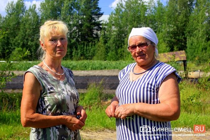 Очистные в Кинешме стали птичьим кладбищем фото 3
