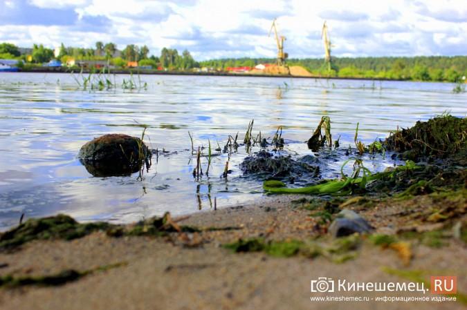 Волгу, Казоху и Кинешемку могут глобально очистить фото 9